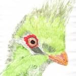 Vogel Aquarell-Technik