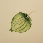 Pomelon Buntstift